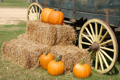 Pumpkins hay and wagon